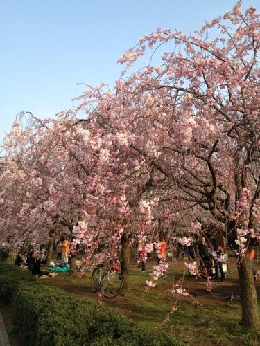 木場公園 2013年3月