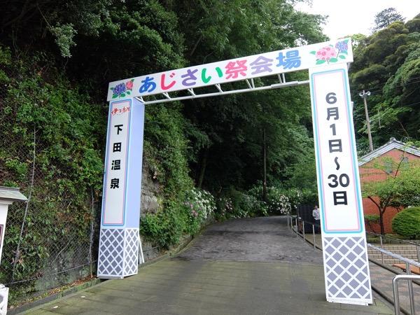 下田あじさい祭201511