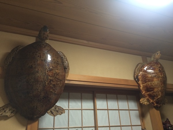 鰻 松村1