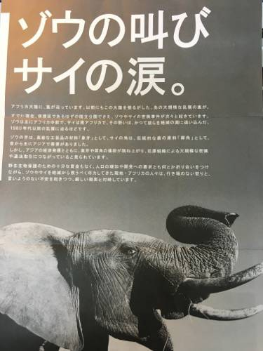 WWF2012年12月のチラシ1