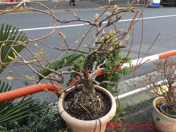 盆栽の魅力を知る3