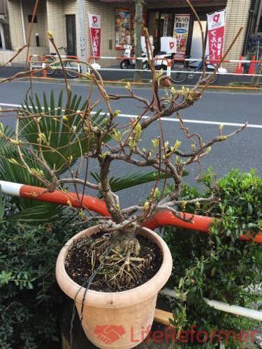 盆栽の魅力を知る1