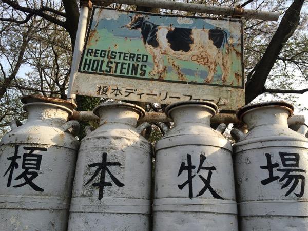 『榎本牧場 フォルトゥーナ』可愛い牛や豚を見ながらめちゃくちゃ濃厚ジェラートが食べられる!閉店間際まで人が並んでました!