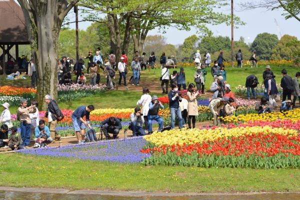 『国営昭和記念公園』フラワーフェスティバルやってるよ〜!なかなか見たことのないチューリップがたくさん咲いていました!