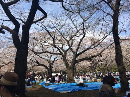 『モブログ花見大会開催決定!!緩く楽しい時間を共に!』に参加してきました!