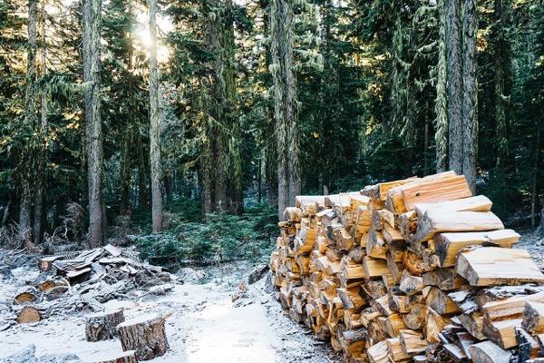 自伐型林業に大きな可能性を感じることが出来ました!『New自伐型林業のすすめ』