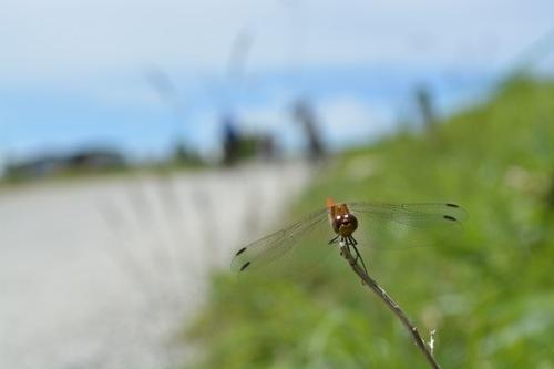 僕が昆虫を好きになった3つの理由。#七ブ侍 #金曜日