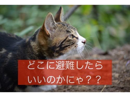 あなたの街の防災アプリはありますか?東京都23区で最寄りの避難場所をチェックしておこう!