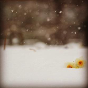 【写真】雪の降る中、木場公園で撮影してきました