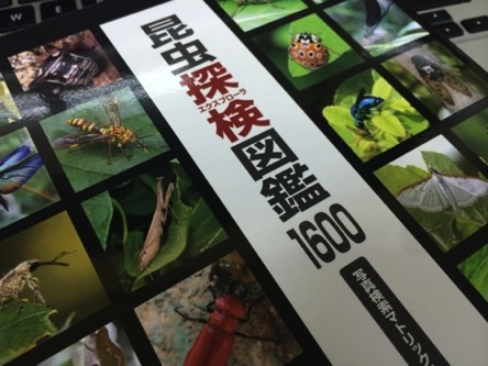 『昆虫探検図鑑1600』著者の《川邊 透》さんのトークイベントに行ってきたよ!