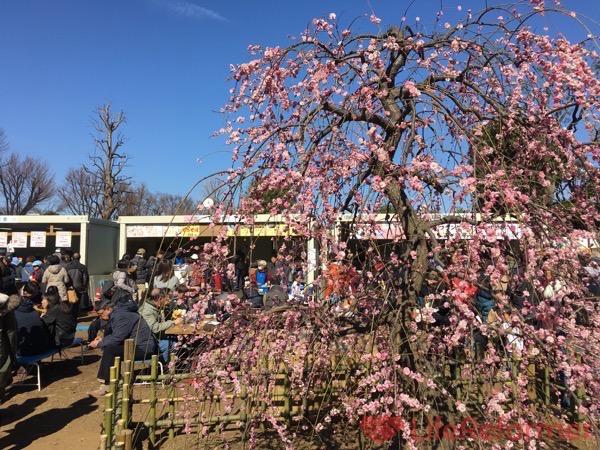羽根木公園梅まつり2017 1