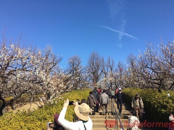 羽根木公園梅まつり2017 8