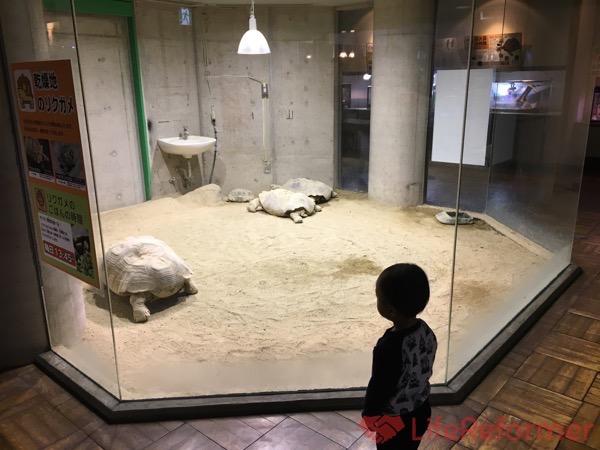 足立区生物園 15